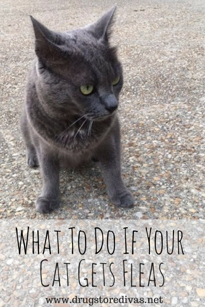 Did you cat start itching? If it has fleas, definitely read this post from www.drugstoredivas.net to find out what to do if your cat gets fleas.